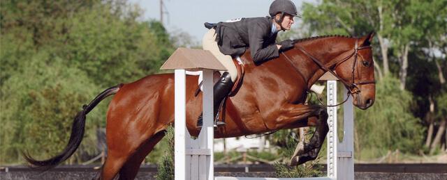 Cavalo de Corrida Fusaichi Pegasus