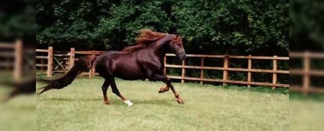 Cavalo de Corrida Annihilator
