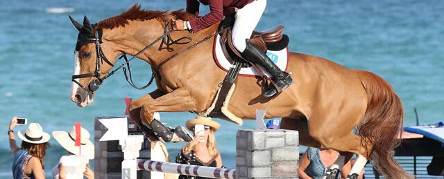 Cavalo de Salto de Obstáculos Palloubet d'Halong